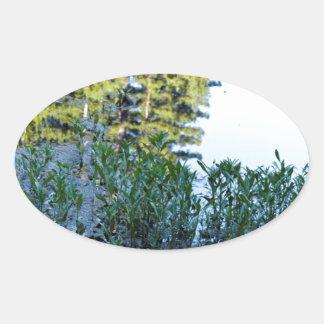 ウシガエルの池の反射 楕円形シール