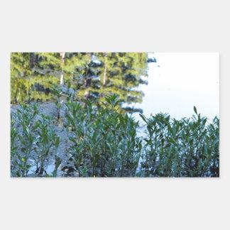 ウシガエルの池の反射 長方形シール