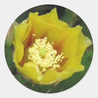 ウチワサボテンサボテンの開花 ラウンドシール