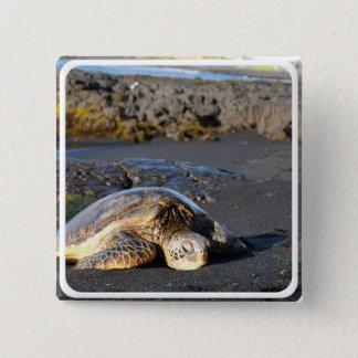ウミガメの正方形Pin 5.1cm 正方形バッジ