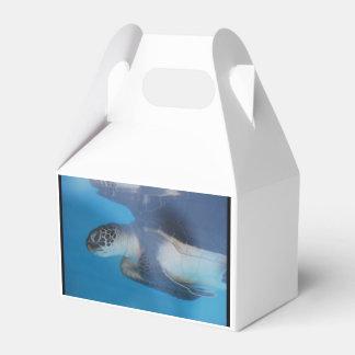 ウミガメ フェイバーボックス