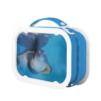 ウミガメ ランチボックス