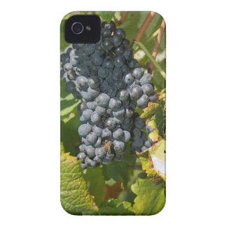 ウルグアイ、モンテビデオのコロン区域。 Bodegas Case-Mate iPhone 4 ケース
