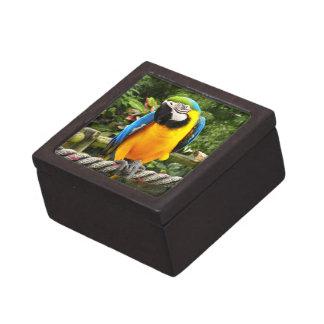 エキゾチックなコンゴウインコのオウム ギフトボックス