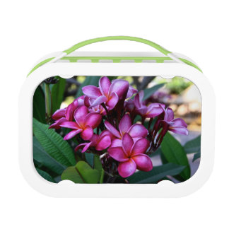 エキゾチックな花、お弁当箱 ランチボックス