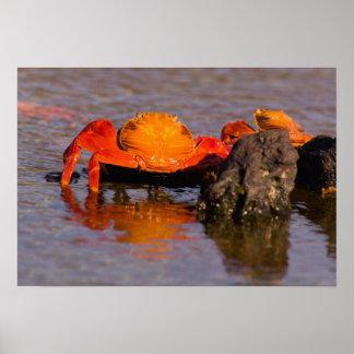 エクアドルのガラパゴス諸島の国立公園、2 ポスター