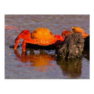 エクアドルのガラパゴス諸島の国立公園、2 ポストカード