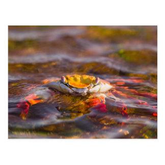 エクアドルのガラパゴス諸島の国立公園、3 ポストカード