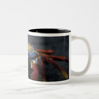 エクアドルのガラパゴス諸島、サリーLightfoot ツートーンマグカップ