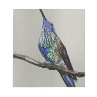 エクアドルのTandayapaの鳥ロッジ。 光っていること ノートパッド