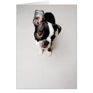 エジソンボストンテリアの子犬 カード