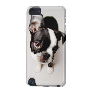 エジソンボストンテリアの子犬 iPod TOUCH 5G ケース