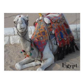 エジプトのラクダ ポストカード