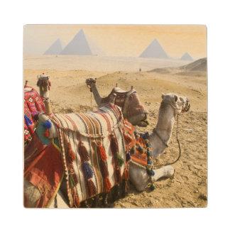 エジプト、カイロ。 を渡る休息のラクダの熟視 ウッドコースター