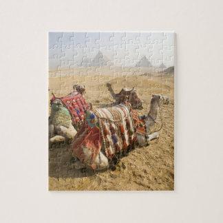 エジプト、カイロ。 を渡る休息のラクダの熟視 ジグソーパズル