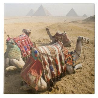 エジプト、カイロ。 を渡る休息のラクダの熟視 タイル