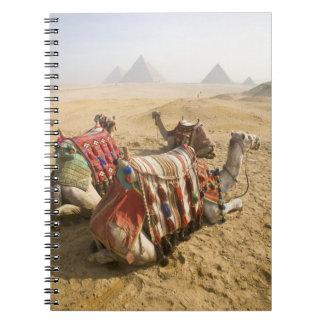 エジプト、カイロ。 を渡る休息のラクダの熟視 ノートブック