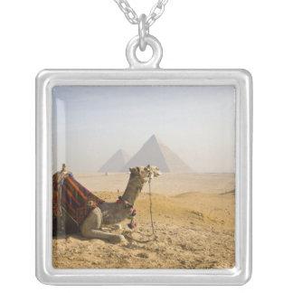 エジプト、カイロ。 単独ラクダはを渡って熟視します シルバープレートネックレス