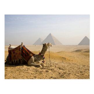 エジプト、カイロ。 単独ラクダはを渡って熟視します ポストカード