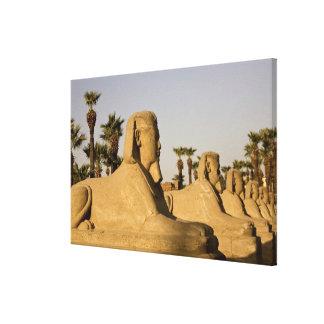 エジプト、ルクソル。 スフィンクスの道はに導きます キャンバスプリント