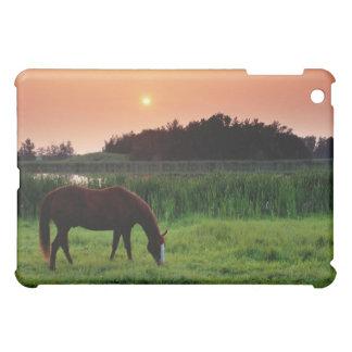 エドモントンの近くで日没で分野で牧草を食べている馬 iPad MINIケース