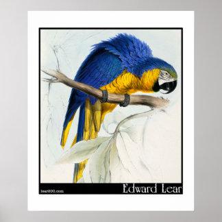 エドワード・リアの青および黄色のコンゴウインコポスター ポスター