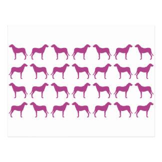 エマJanewayの紫色の猟犬のコレクション ポストカード