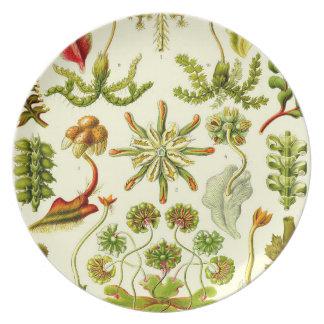 エルンスト・ヘッケルのゼニゴケ類 ディナー皿