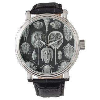 エルンスト・ヘッケルのAspidonia 腕時計