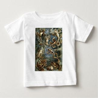 エルンスト・ヘッケルのBatrachia ベビーTシャツ
