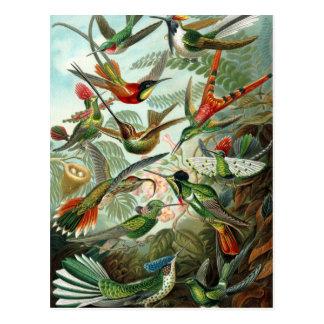エルンスト・ヘッケル著ハチドリ、ヴィンテージの鳥の木 ポストカード