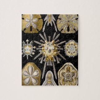 エルンスト・ヘッケル著ヴィンテージの砂ドルの雲丹 ジグソーパズル
