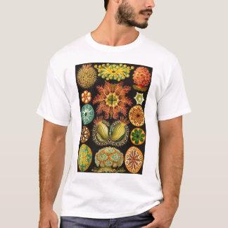 エルンスト・ヘッケル- Ascidiae Tシャツ