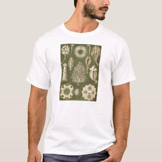 エルンスト・ヘッケルCalcispongiae Tシャツ