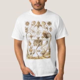 エルンスト・ヘッケルTubularia Tシャツ