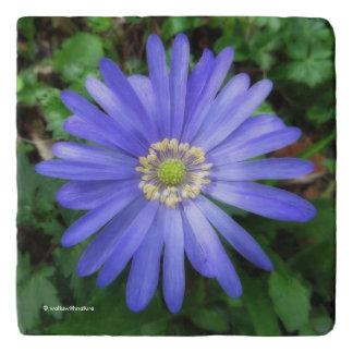エレガントで青いアネモネの花 トリベット