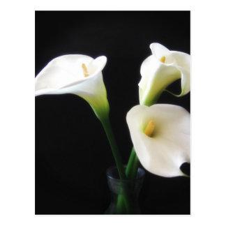 エレガントなオランダカイウユリによっては12が開花します ポストカード
