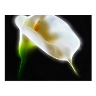 エレガントなオランダカイウユリによっては3モダンが開花します ポストカード