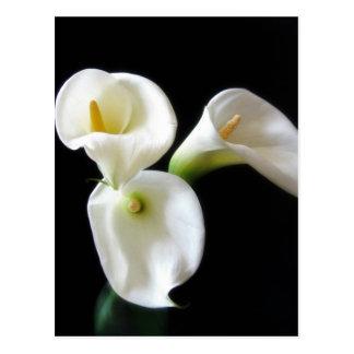 エレガントなオランダカイウユリによっては6つが開花します ポストカード