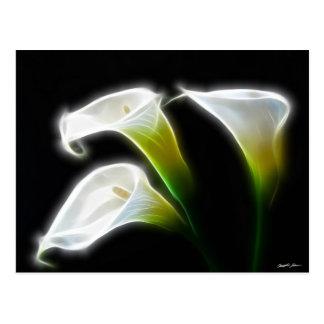 エレガントなオランダカイウユリによっては7モダンが開花します ポストカード