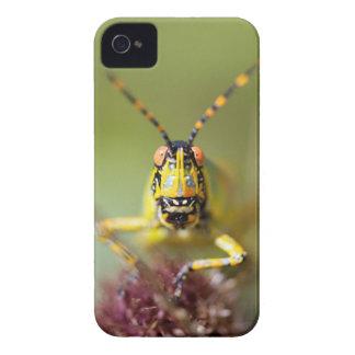 エレガントなバッタのクローズアップ Case-Mate iPhone 4 ケース