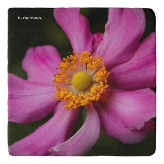エレガントなピンクの日本のなアネモネの花 トリベット