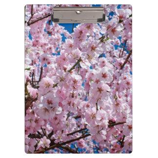エレガントなピンクの桜の木の写真 クリップボード