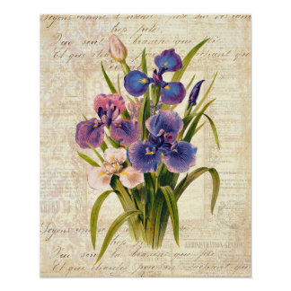 エレガントなヴィンテージのフランスのなピンクおよび紫色のアイリス ポスター
