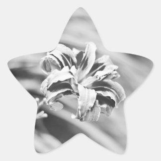 エレガントな白黒花の写真撮影 星シール