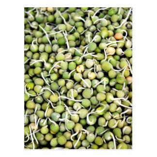 エンドウ豆の芽 ポストカード