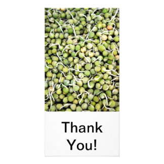 エンドウ豆の芽 写真カードテンプレート