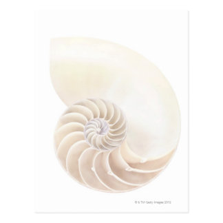 オウムガイの貝、クローズアップ ポストカード