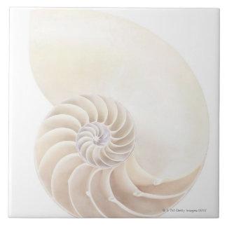 オウムガイの貝 タイル