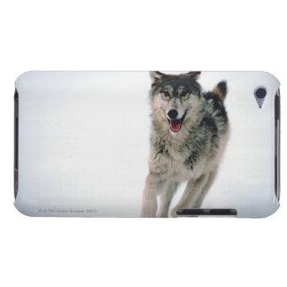 オオカミのランニング Case-Mate iPod TOUCH ケース